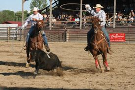 Team Roping a Steer